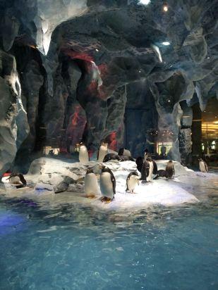 珠海珠海长隆企鹅酒店怎么样
