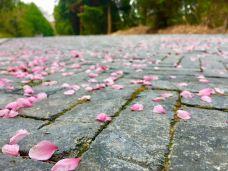 龙门崮风景区-日照-長易